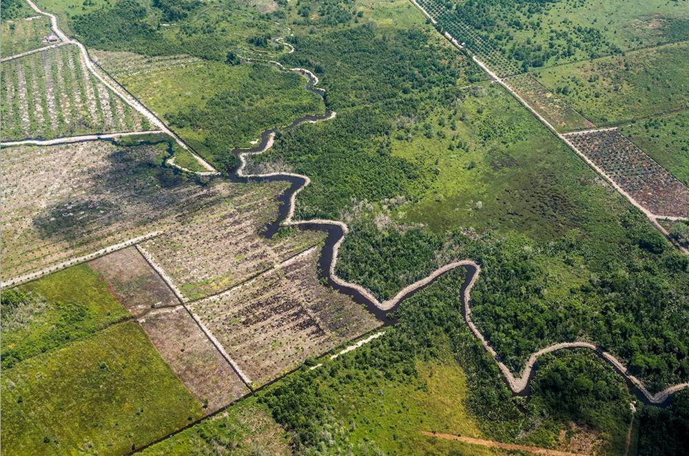 인도네시아는 전 세계에서도 가장 급격하게 숲을 잃어가고 있는 나라 중 하나다. 목재용 벌채와 자원채굴도 한몫하고 있지만, 무엇보다도 야자유(palm oil)를 얻기 위한 경작지의 개간이 많은 비중을 차지하고 있다. 사진은 사라져가는 인도네시아 보르네오 숲. /사진출처=incognita agency
